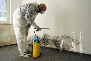 Mold Removal professional spraying mold growth on the inside of a wall